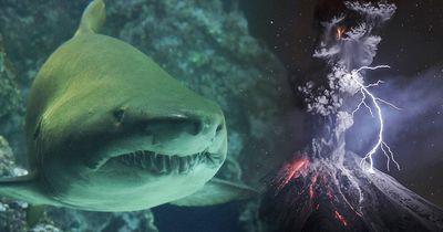 In diesem aktiven Vulkan wurden Haie gefunden - lebendige!