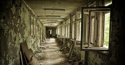 Tschernobyl gilt als unbewohnbar. Doch diese Tiere sehen das anders...