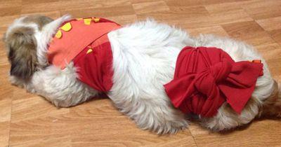 Deswegen solltest du einen Schal um deinen Hund wickeln: