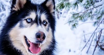 Welcher Hund wärst du?