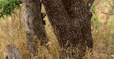 Welches Tier siehst du hier?