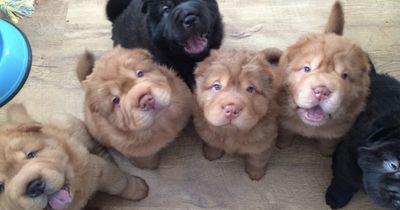 Diese Hunderasse erobert gerade die Herzen im Sturm