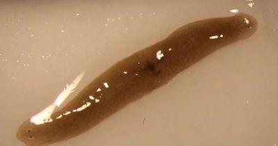 Forscher schicken Wurm ins All
