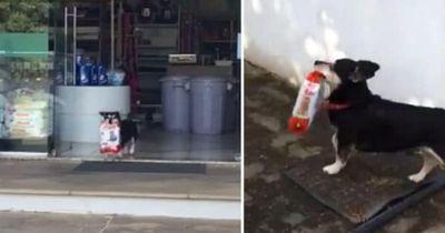Dieser Hund geht jeden Tag für sich selbst einkaufen!