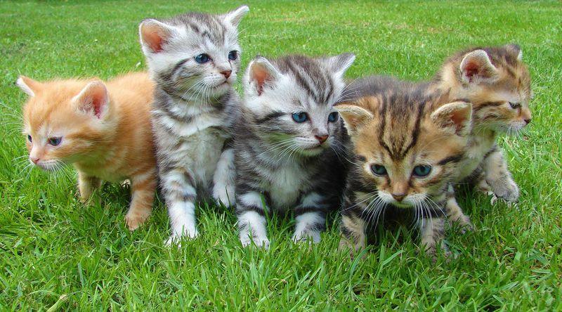 Das sind die verrücktesten Katzenfakten!