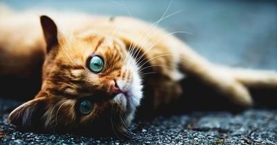 Deswegen starrt deine Katze dich immer so an!