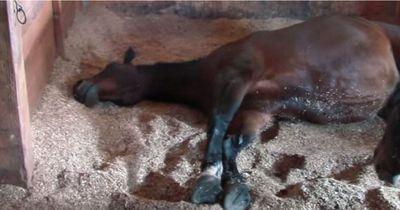 Pferde machen im Schlaf Musik