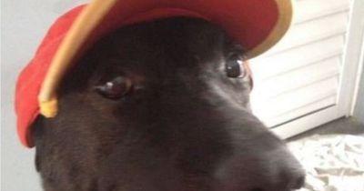 Dieser Hund ist der süßeste Tankstellen-Mitarbeiter, den du je gesehen hast!