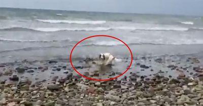 Durch seinen Fund, rettet dieser Hund ein Leben