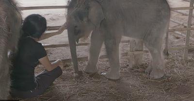 Sie beginnt zu singen - und die Elefantenbabys sind hin und weg!