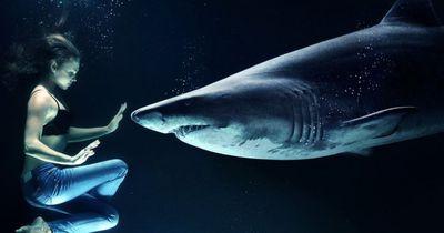 Diese Fakten über Haie kennt (leider!) kaum jemand
