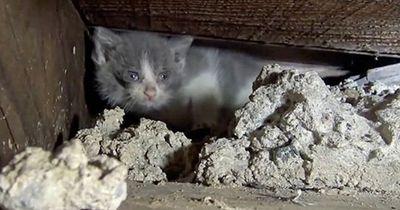 Diese Kätzchen wurden unter einer Treppe geboren