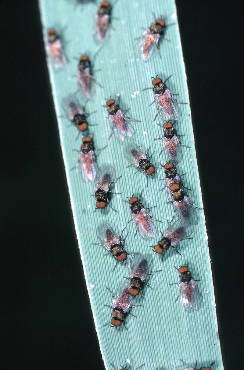 Achtung: Ein Stich dieser Mücke kann lebensgefährlich werden!