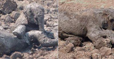 Als sie die Elefanten sahen, wussten sie, dass sie helfen müssen