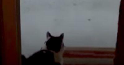 Diese arme Katze bekommt gleich den Schreck ihres Lebens