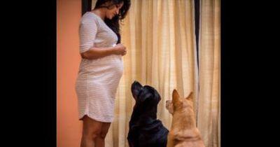 Weil sie schwanger ist, soll sie all ihre Hunde abgeben