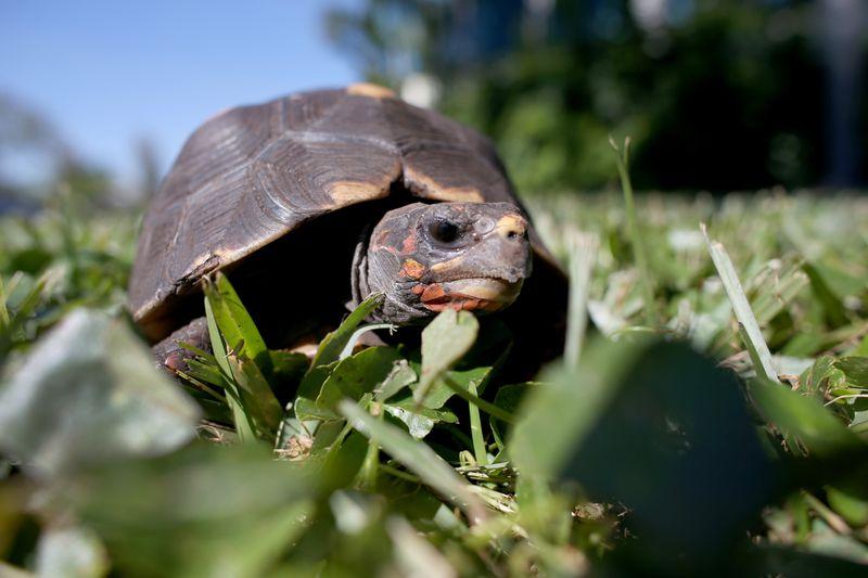 Einzigartige Rettungsaktion für Schildkröten