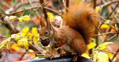 Deswegen solltest du Eichhörnchen lieben!