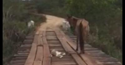 Dieses Baby-Pferd konnte sich nicht mehr befreien