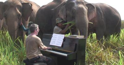 Blinder Elefant bekommt eine musikalische Überraschung zum Frühstück