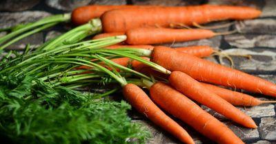 Du willst deinem Hund Karotten füttern?
