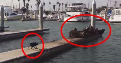Das passiert, als der Welpe auf die Seehunde zurennt