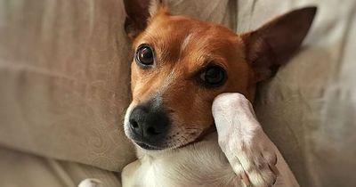 Sollte der Hund mit ins Bett?