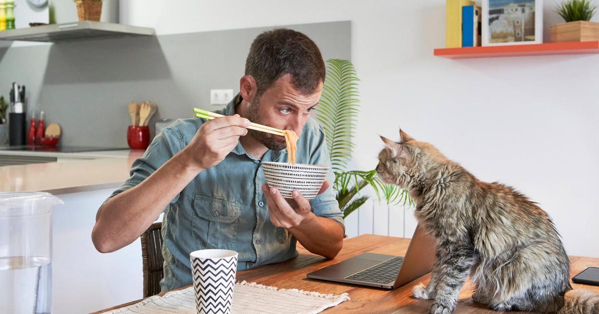 5 Gerichte, die du machen kannst, wenn deine Katze nicht frisst