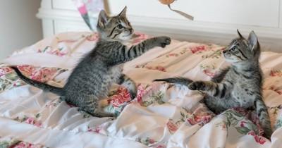 Das ist der Grund, wenn Katzen überall hinpinkeln