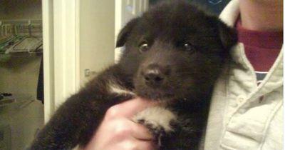 Mann denkt er hat einen Hunde-Welpen adoptiert
