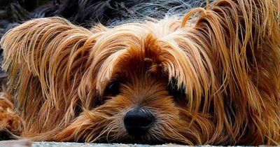 Sie ist der letzte Hund, der aus dem Tierheim verschwinden soll