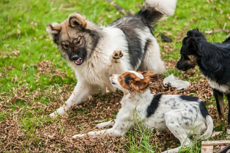 Das kannst du tun, wenn dein Hund aggressiv ist