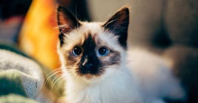 Wenn sich deine Katze so benimmt, solltest du aufpassen!