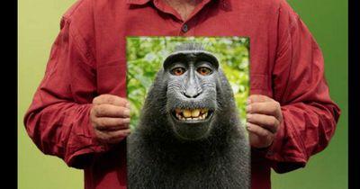 PETA verklagt Fotograf wegen Affen-Selfie