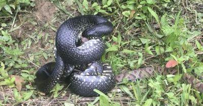 Deshalb sind Schlangen nützlich