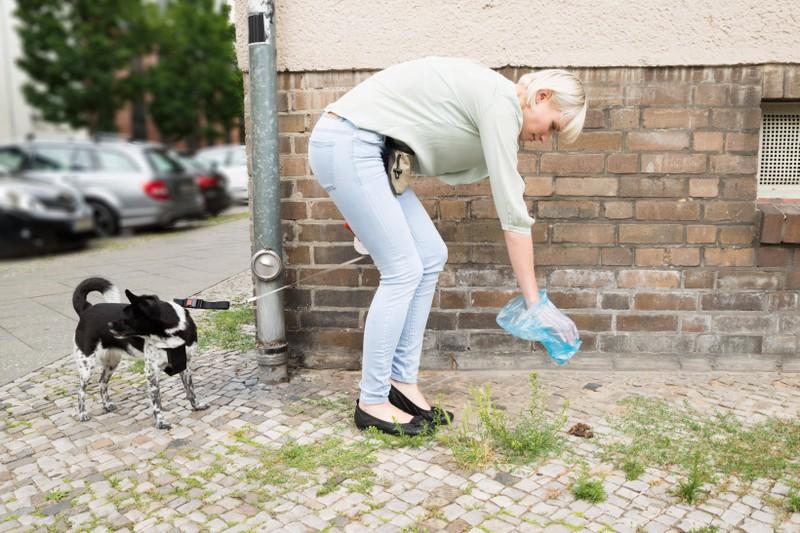 Das verrät die Farbe des Hundekots über die Gesundheit deines Hundes