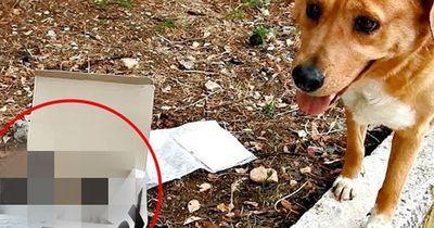 So rührend kümmern sich diese Hunde um kleine Kätzchen