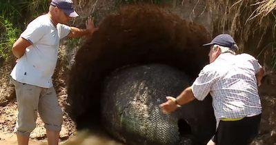 Ein Mann denkt, er findet ein Riesen-Dinosaurier-Ei, doch es ist noch viel unglaublicher