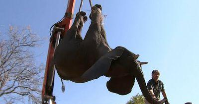 Diese 500 Elefanten sind der Grundstein für eine neue Population