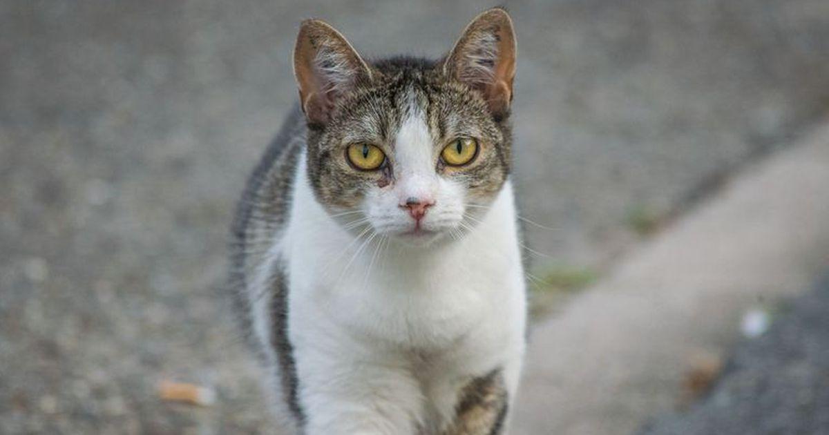 5 Fakten über Katzen, die jeder Katzenbesitzer wissen sollte