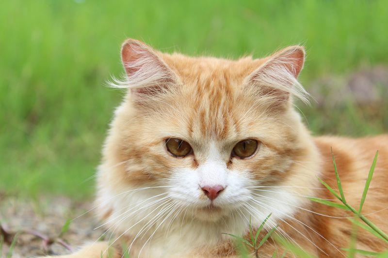 Auf diesem Hof leben 57 Katzen