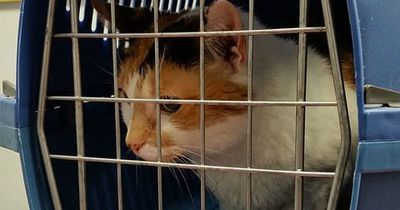 So gewöhnt man Katzen richtig an Transportboxen