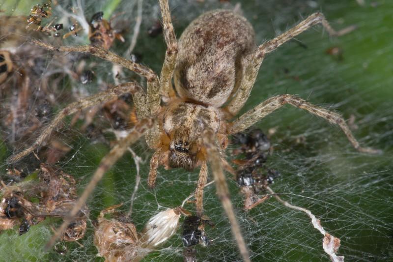 Die Auflösung des Tierrätsels rund um Spinnennetze