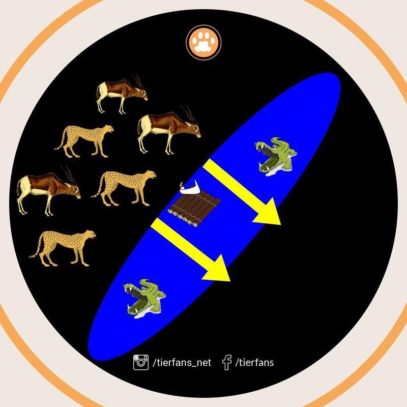 Das Tierrätsel um den Buschbrand und die Antilopen wird grafisch dargestellt und aufgelöst
