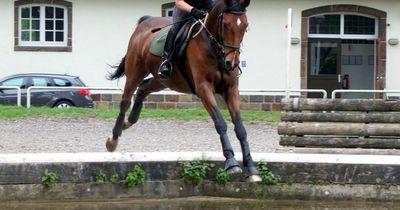 Dramatischer Unfall: Pferd stürzt mit Reiterin in die Isar