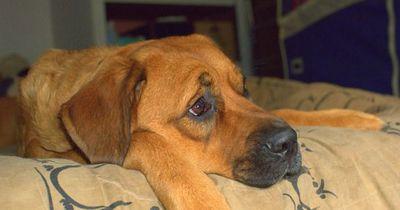 So könnt ihr euren Hund ans Alleinsein gewöhnen