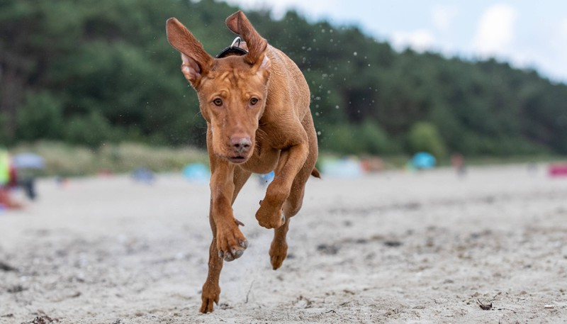 Rätsel: Mit welcher Geschwindigkeit kommt der Hund an?