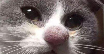 Die Katzen hatten unglückliche Begegnungen mit Bienen