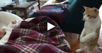 Katze sorgt sich, als das Baby niest