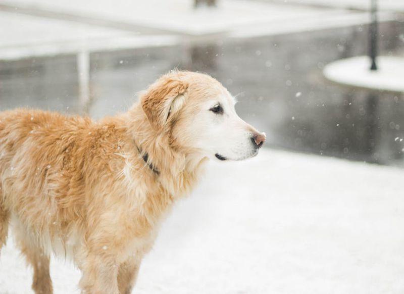 Sein Hund rannte davon - doch Gonker fand den Weg zurück nach Hause